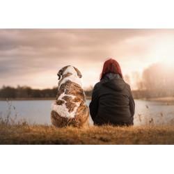 voyager avec son chien en camping car