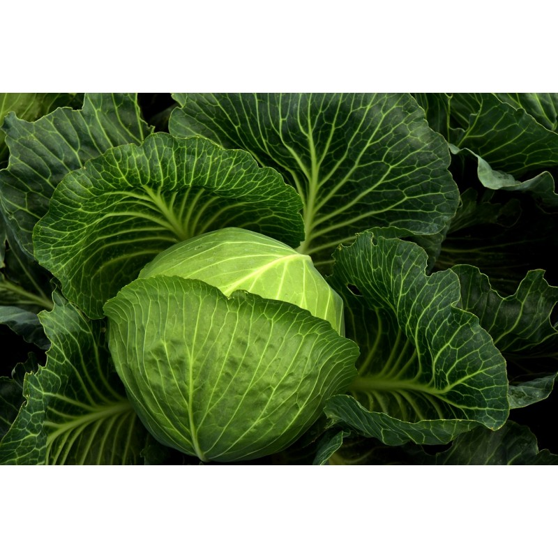 10 légumes d\\\\\\\\\\\\\\\'hiver