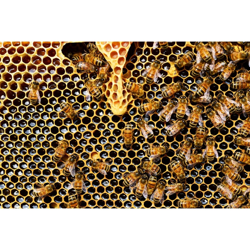 Les abeilles fabriquent la gelée royale.
