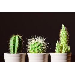 Comment rendre son intérieur plus vivant en y ajoutant des plantes ?