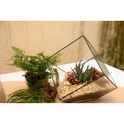 La tendance des terrariums