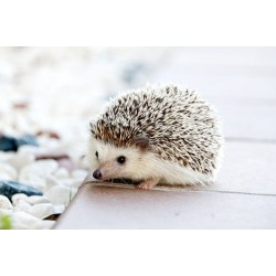 De nouveaux animaux de compagnie en vogue?