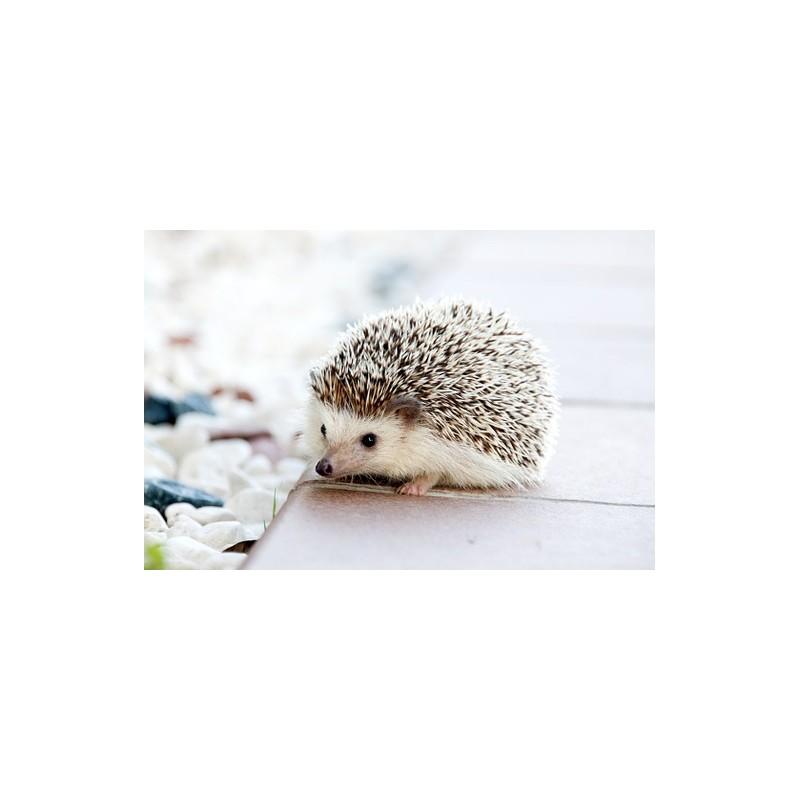 Les animaux de compagnie sont des compagnons de vie précieux pour petits et grands !