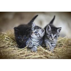 3 chatons ensemble