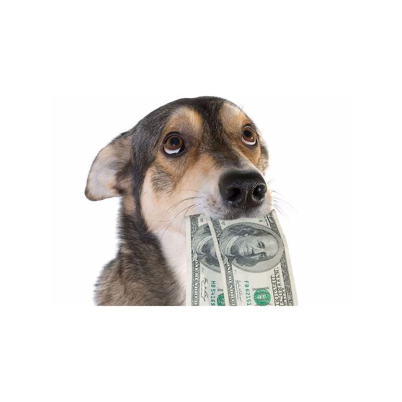 Un impôt sur les animaux de compagnie serait-il utile ?