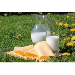 Les bienfaits des produits laitiers