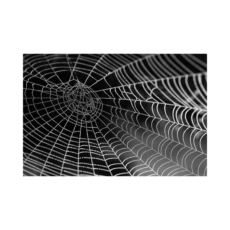 Réseau d\'une toile d\'araignée
