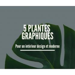 5 plantes graphiques pour un intérieur design et moderne