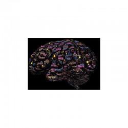 Le neuromarketing ou comment utiliser les émotions dans nos achats.
