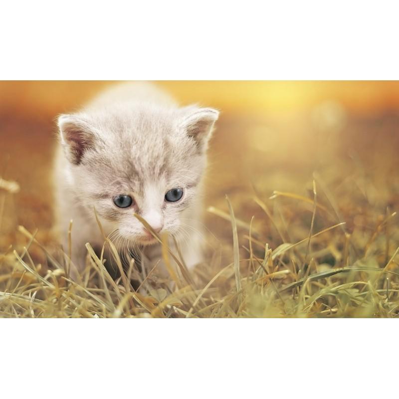 Un chaton