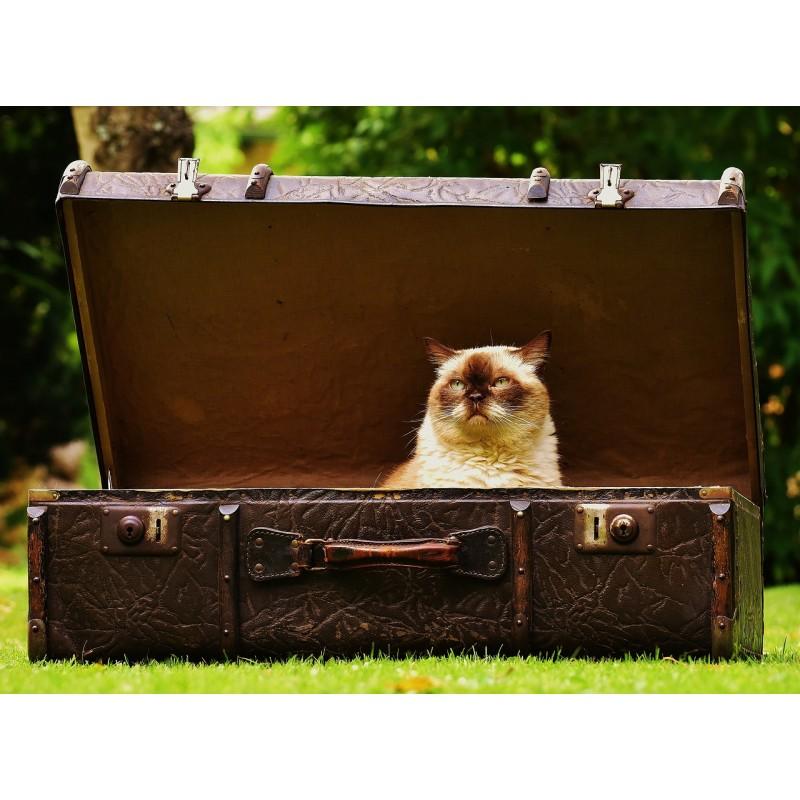 Valise avec chat