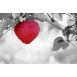 Les pommes : un atout santé considérable