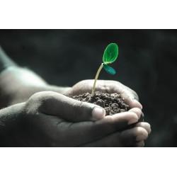 Jardinage: connaître son sol pour savoir quoi y planter