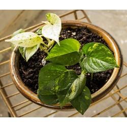 Le top 5 des plantes dépolluantes anti-tabac