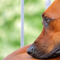 La dépression chez le chien: comment l'enrayer?