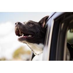 Transporter son chien en toute sécurité