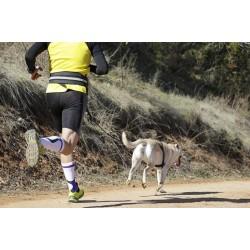 Le canicross: le plaisir de courir avec son chien