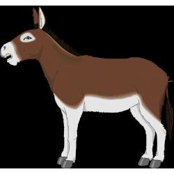 l\'âne sans queue