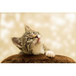 Canicule : 5 conseils pour protéger votre chat