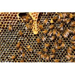 Tous les bienfaits du Miel sur notre santé