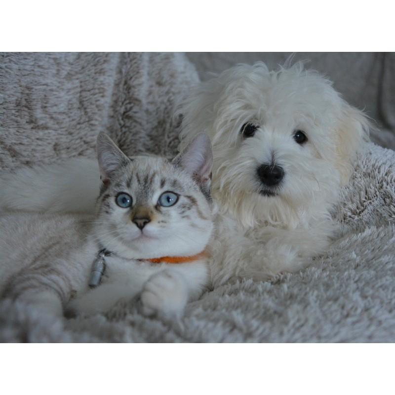 Assurance chat chien..le bon choix