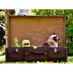 Animal en voyage