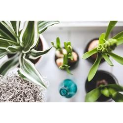 Le bassinage des plantes